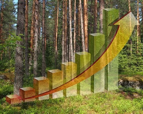 ECONONICS AND FOREST MANAGEMENT