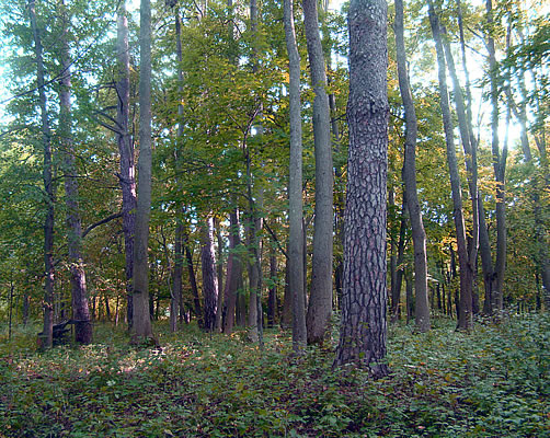 SILVICULTURE AND FOREST TREATMENT