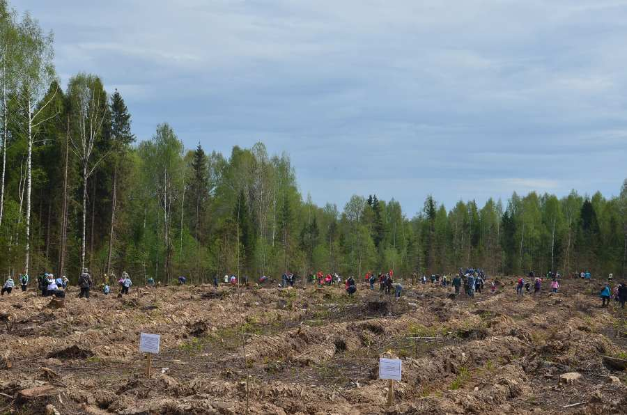Kostroma foresters did first-rate work on Arbor day.